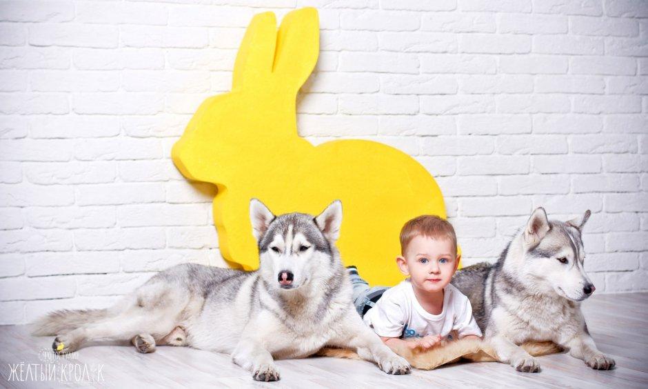 детская фотосессия с хаски в фотостудии